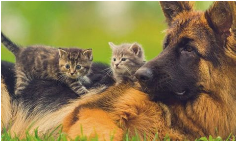 Significance of Animal Insurance