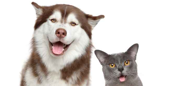 Best Insurance Policy for Cats