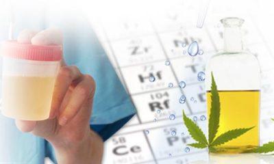 FAKE PEE FOR DRUG TEST
